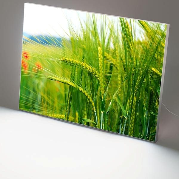 MaxiFrame LED 20 einseitig DIN B1 Postermaß